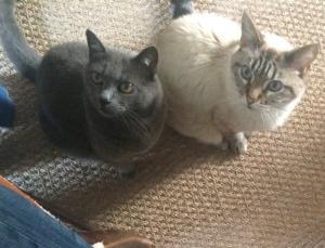 Les chats de Côté Jardin Les Vans